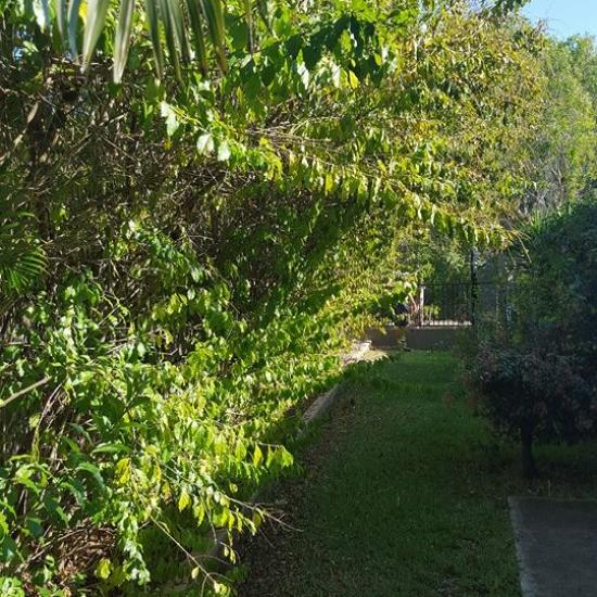 Pruning Before