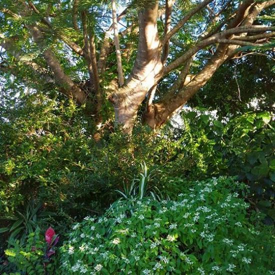 tree pruning 02 before