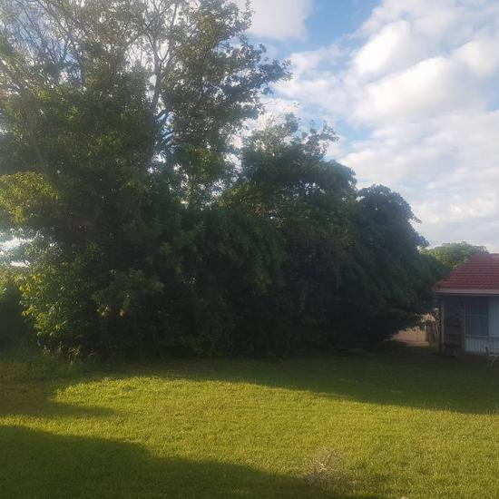 tree removal 03 before