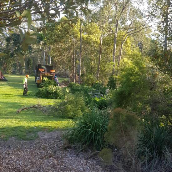fenceline clearing at Pimpama Before
